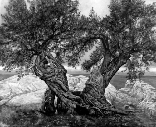 2in1olivetrees