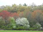 5_08_upper_mill_brook_trees_in_bloom_5-10-2008_9-08-28_am_medium_5_08_upper_mill_brook_trees_in_bloom_5-10-2008_9-08-28_am_medium