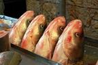 fish-heads_medium