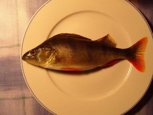 fish_for_dinner.jpg