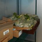 ft_fridge_greens_medium