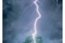 lightning-and-tree1