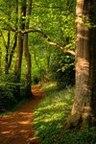 path_through_woods_medium