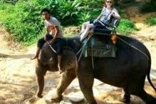 riding_an_elephant_large