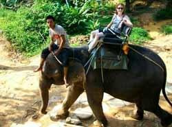 riding_an_elephant_large