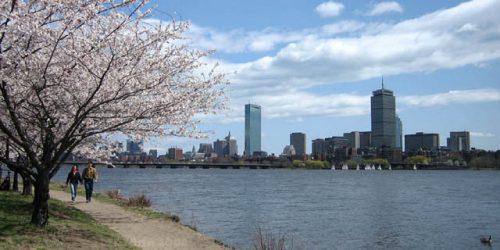 060416_1306b_boston_and_cherry_blossoms