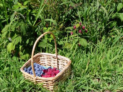 blueberries-and-raspberries-basket_picnik