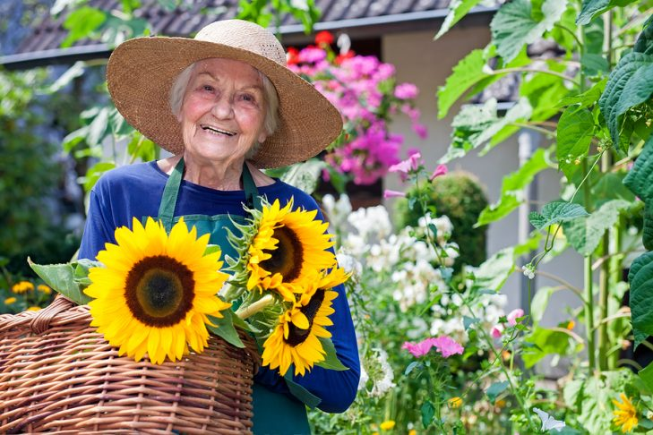 Elderly Woman With Basket of Fresh Sunflowers