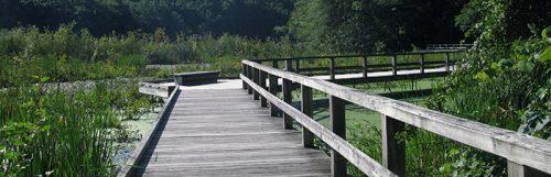 boardwalk-trail-summer